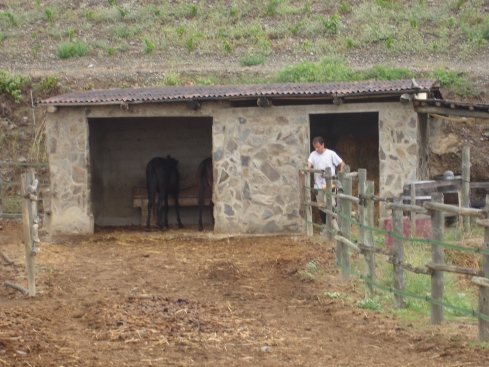 Xavier Feeds the Mules at Sao del Coster